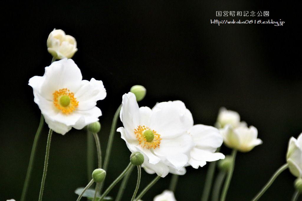 昭和記念公園の秋をカメラに(^^♪_e0052135_21121666.jpg