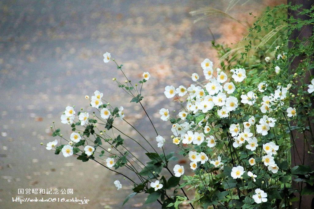 昭和記念公園の秋をカメラに(^^♪_e0052135_21122021.jpg