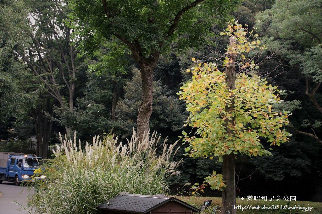 昭和記念公園の秋をカメラに(^^♪_e0052135_21122548.jpg