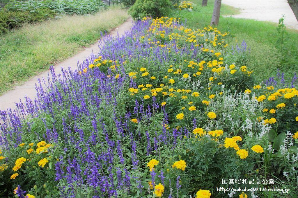 昭和記念公園の秋をカメラに(^^♪_e0052135_21123358.jpg