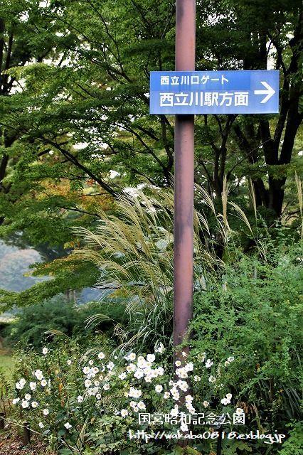 昭和記念公園の秋をカメラに(^^♪_e0052135_21124595.jpg