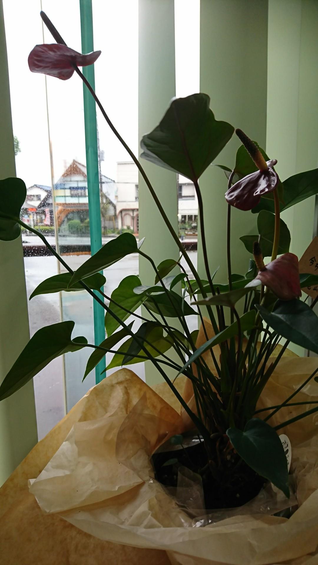 雨の日ばかり_b0374059_12270770.jpg