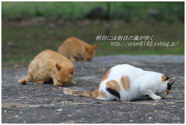 f0361079_19491168.jpg