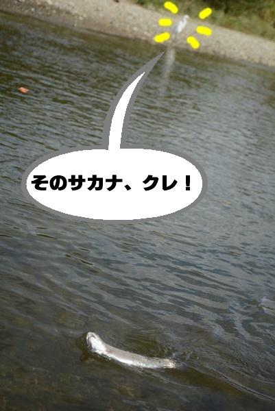 d0164783_01320518.jpg