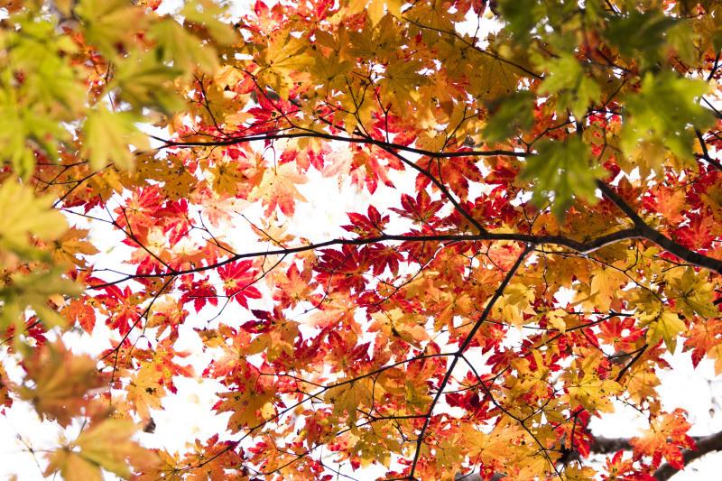 秋の日_d0370716_04475814.jpg