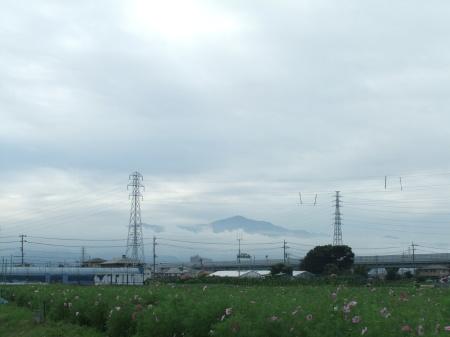 晴れたらいいね。..秋桜、._b0137932_16334612.jpg