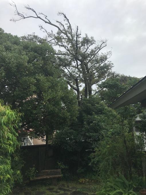 雨のコンパウンド_b0167282_22023984.jpg