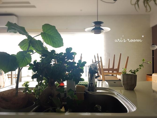 わが家の数少ないリアルグリーン、水やりについて。それからクリーニングに出していた服が戻ってきてホッ(´∀`)_a0341288_18373500.jpg