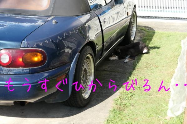 f0369014_13411075.jpg