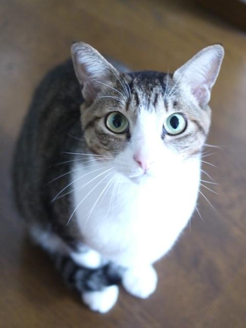 猫のお留守番 たんたんくん編。_a0143140_21203659.jpg