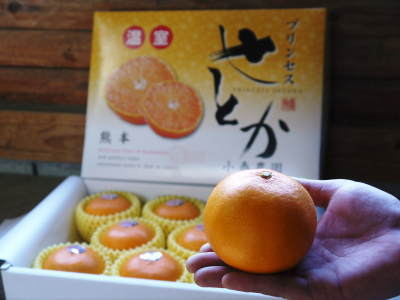 究極の柑橘「せとか」 色が抜け始めました!まもなくハウスにビニールをはり潅水と温度管理で仕上げていきます_a0254656_17360996.jpg