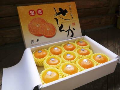 究極の柑橘「せとか」 色が抜け始めました!まもなくハウスにビニールをはり潅水と温度管理で仕上げていきます_a0254656_17370148.jpg