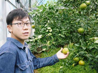 究極の柑橘「せとか」 色が抜け始めました!まもなくハウスにビニールをはり潅水と温度管理で仕上げていきます_a0254656_18032295.jpg