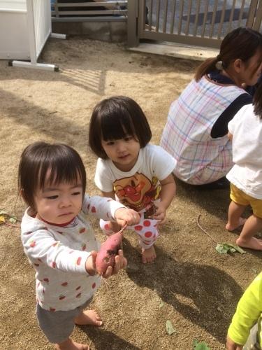 乳児クラス、いもほりをしました_c0151262_22462397.jpeg