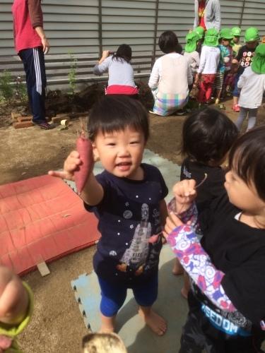 乳児クラス、いもほりをしました_c0151262_22470394.jpeg
