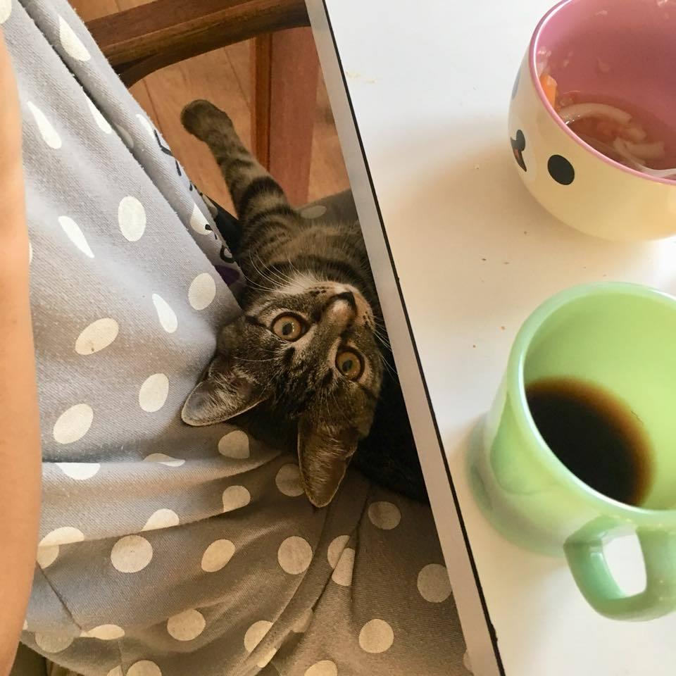 食いしん坊猫_b0195783_09280340.jpg
