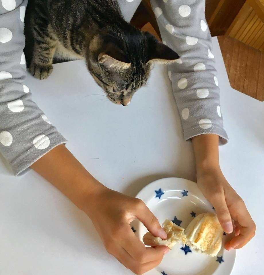 食いしん坊猫_b0195783_09351481.jpg