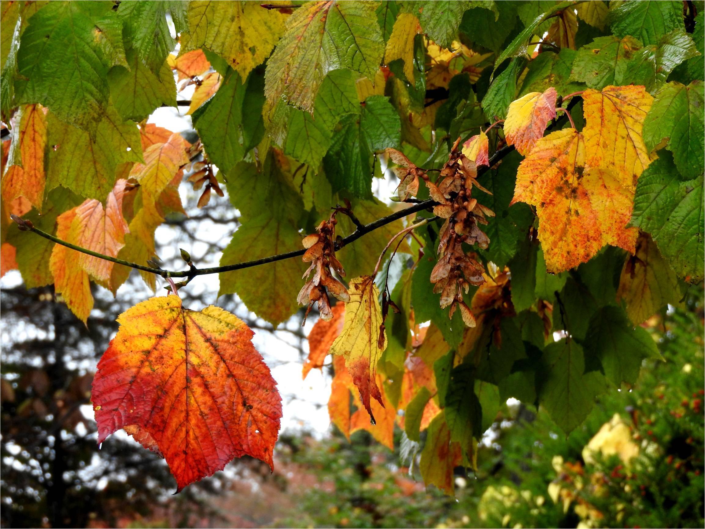 週末の天気と気温(10月3週目)-台風情報追記-_b0174425_17053220.jpg
