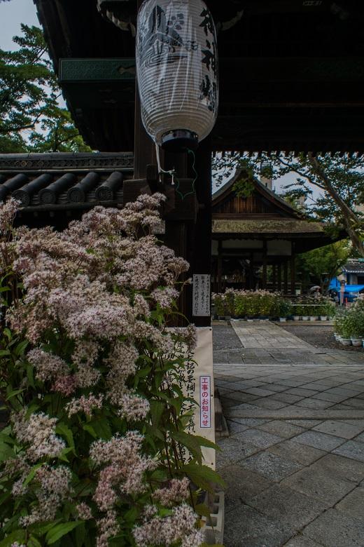 藤袴まつり~下御霊神社_e0363038_1245588.jpg