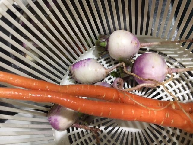 気温下がり雨でした お店に戻って 収穫した野菜を洗ったところで 画像UPします_c0222448_14483264.jpg