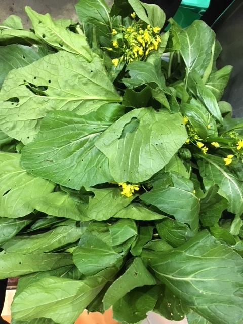 気温下がり雨でした お店に戻って 収穫した野菜を洗ったところで 画像UPします_c0222448_14485138.jpg