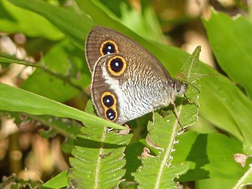 リュウキュウウラボシシジミなど   沖縄の蝶(その4)_d0353091_10461899.jpg