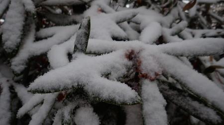 初雪_e0120896_06343504.jpg