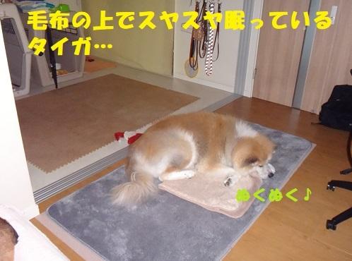 f0121712_16094788.jpg