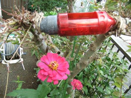 イチゴの苗が届き...台風襲来前に_b0137932_13003879.jpg