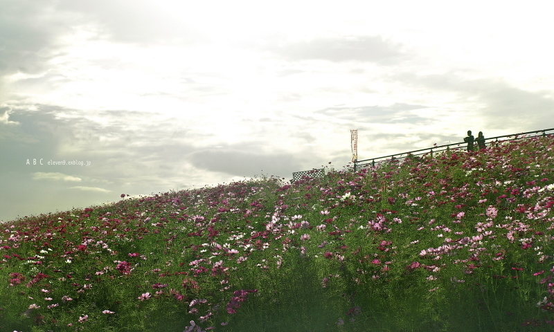 秋雨の合間に_f0315034_16570348.jpg