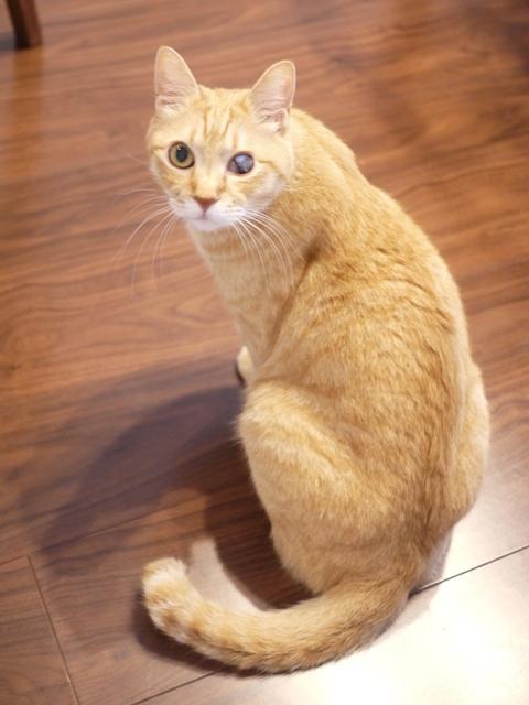 猫のお留守番 ぽぽんたくん編。_a0143140_22312867.jpg