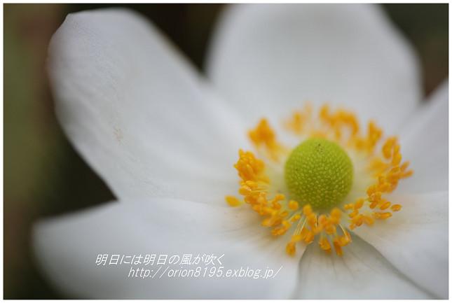 f0361079_16294036.jpg