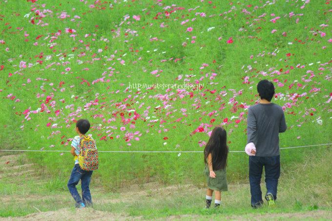 秋桜につつまれて_b0324291_00453593.jpg