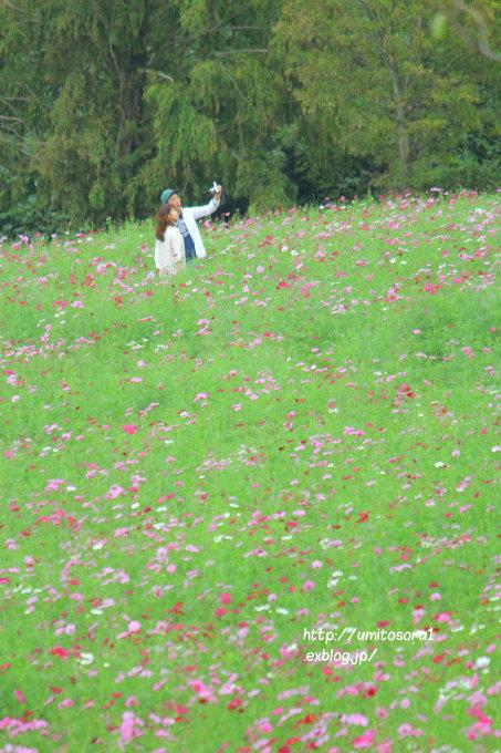 秋桜につつまれて_b0324291_00453784.jpg