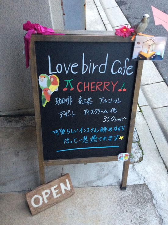 京都のラブバードカフェ・cherryさんに行ってきました!_d0123492_2312521.jpg