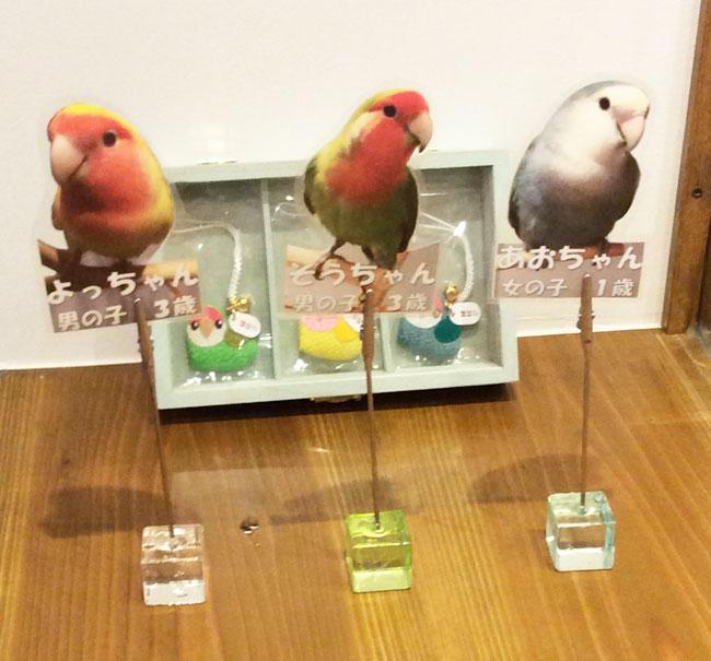 京都のラブバードカフェ・cherryさんに行ってきました!_d0123492_23202611.jpg