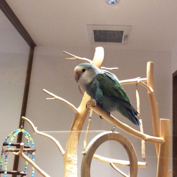 京都のラブバードカフェ・cherryさんに行ってきました!_d0123492_23274557.jpg