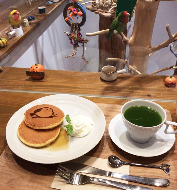 京都のラブバードカフェ・cherryさんに行ってきました!_d0123492_23352912.jpg