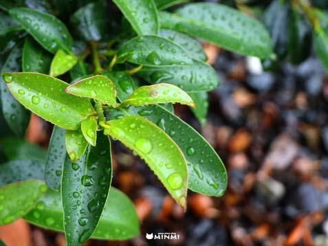 小雨が降ってる金曜日♪( ̄ー ̄)_c0140599_12003619.jpg