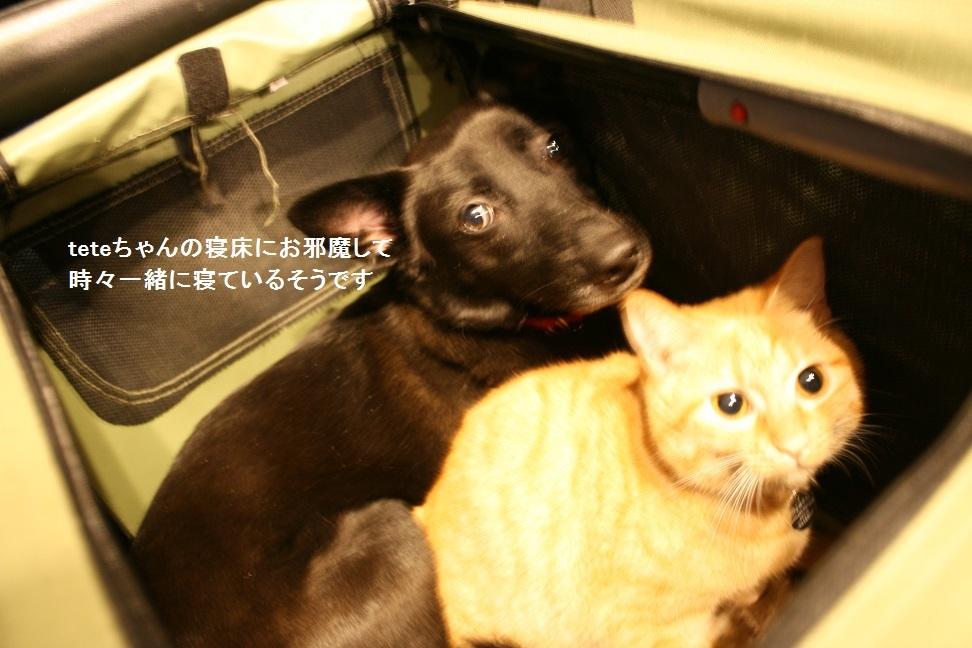 横須賀めぐり_f0242002_23324015.jpg