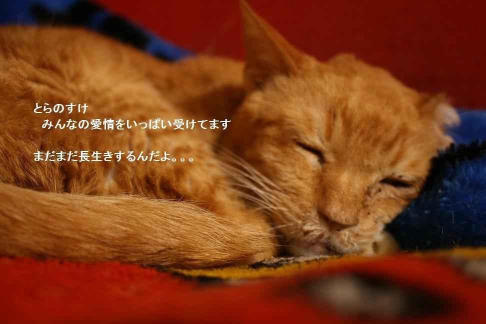 横須賀めぐり_f0242002_23334530.jpg