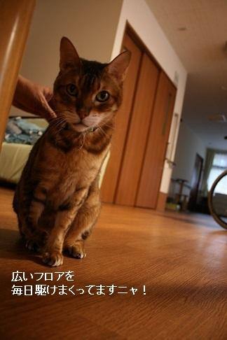横須賀めぐり_f0242002_23335782.jpg