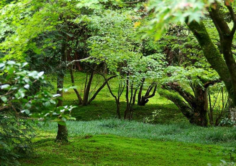 世界遺産  苔寺_d0360910_16444162.jpg