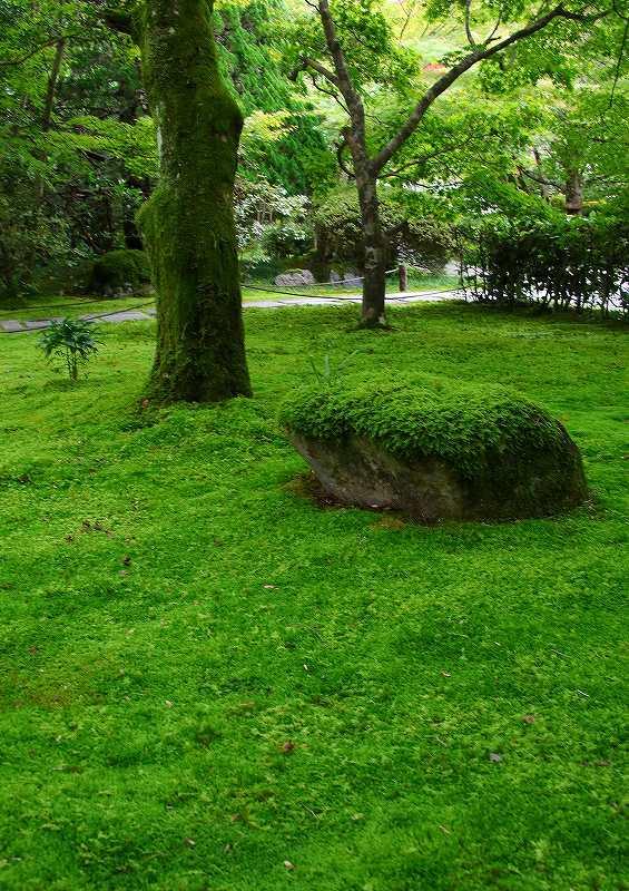 世界遺産  苔寺_d0360910_16451535.jpg