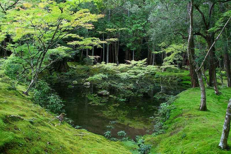 世界遺産  苔寺_d0360910_16461102.jpg