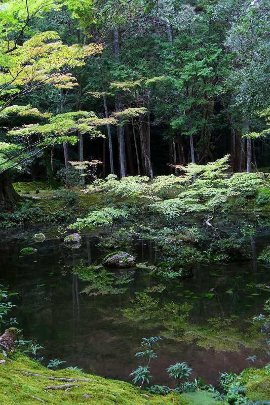 世界遺産  苔寺_d0360910_16484356.jpg