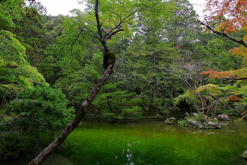 世界遺産  苔寺_d0360910_16492023.jpg
