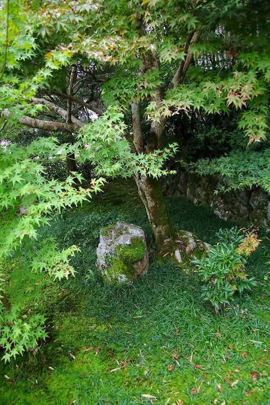 世界遺産  苔寺_d0360910_16542480.jpg