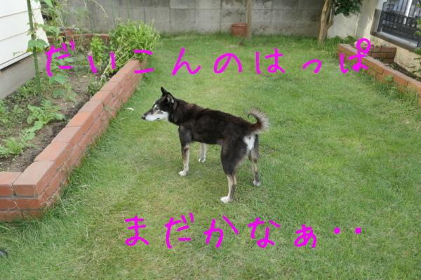 f0369014_15301907.jpg