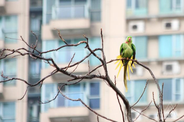 567 Kowloon Park ~香港の繁華街は野鳥の楽園~_c0211532_11044027.jpg